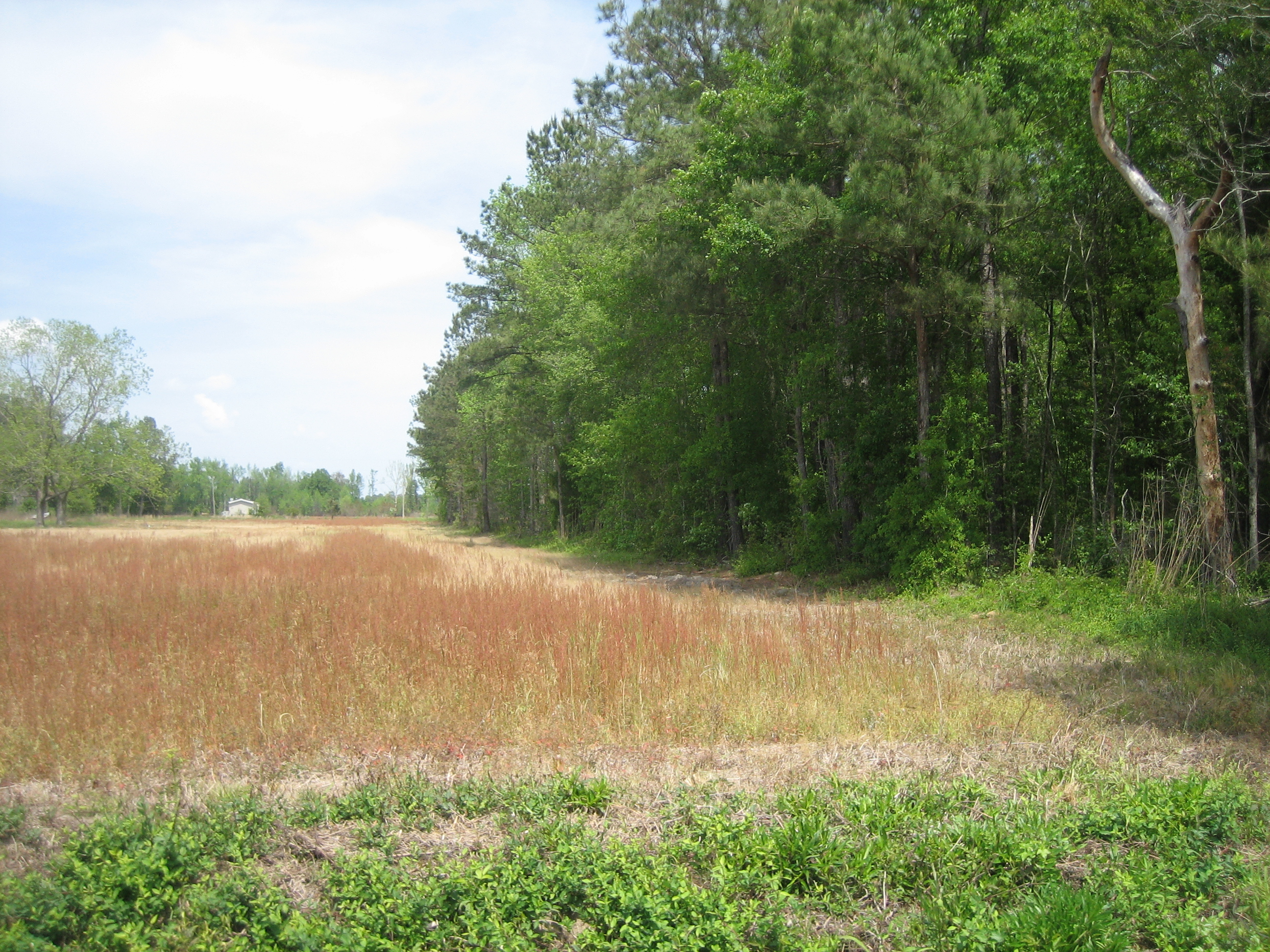 Additional Photos 43 Acres RAW LAND on